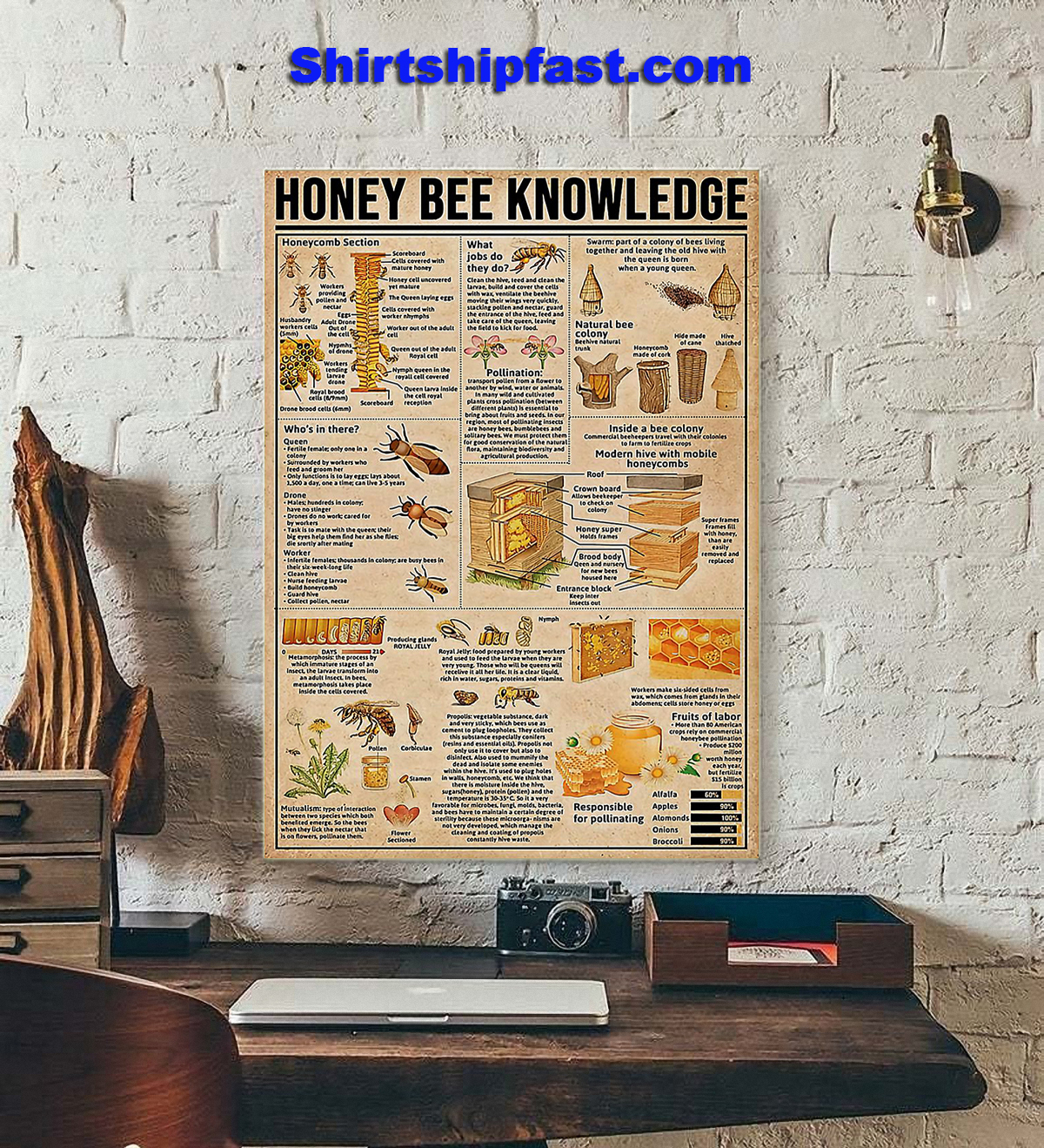 Honey bee knowledge poster - Picture 2